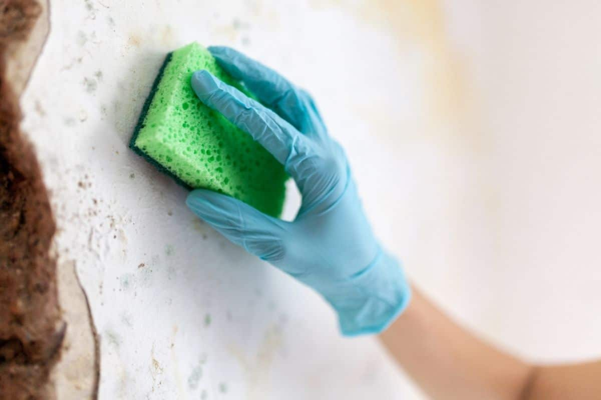 hand scrubs mould from wall